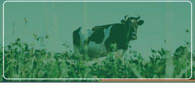 Vacine seu rebanho conta a febre aftosa