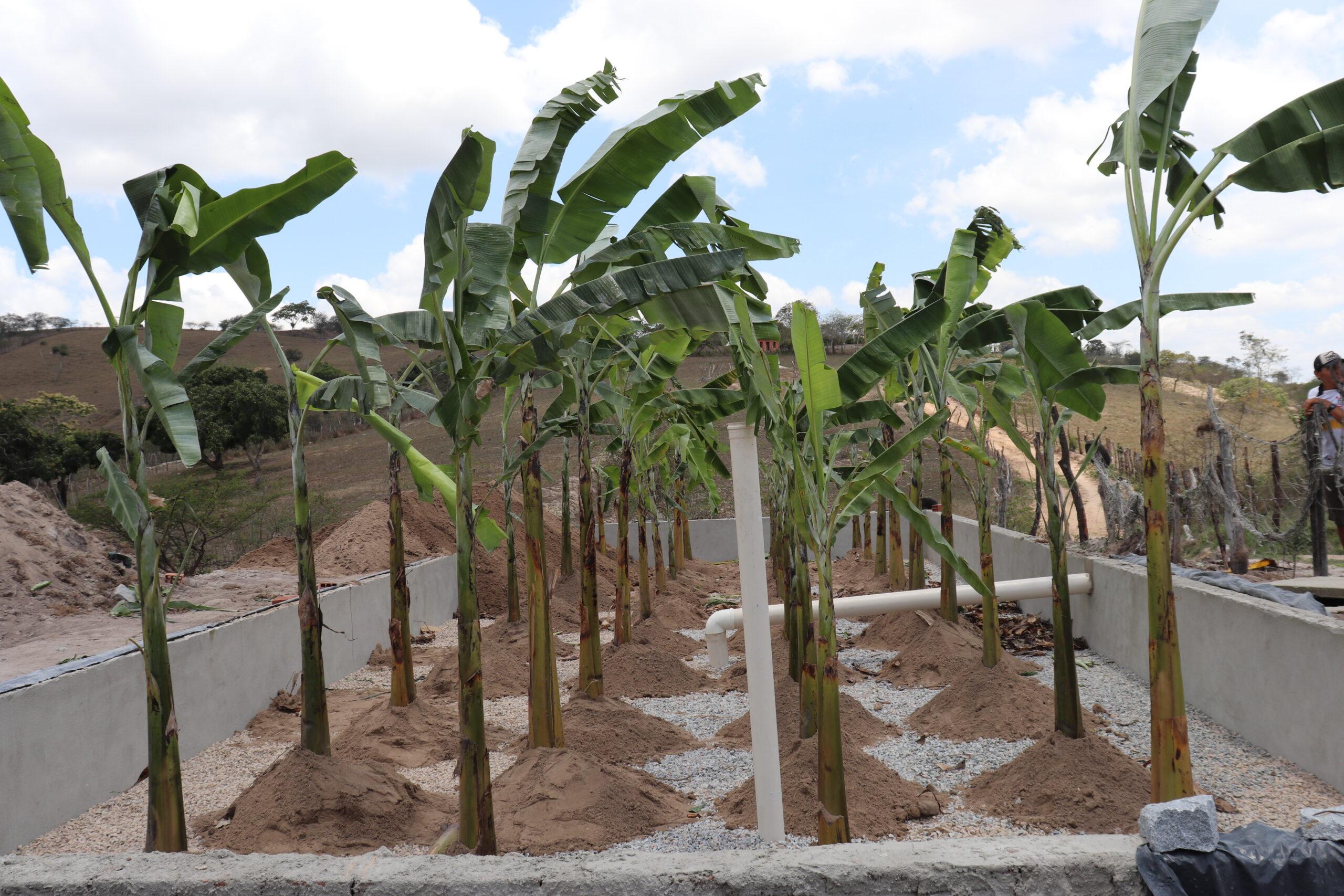 Cupira desenvolve projeto de tratamento ecológica de esgoto em Alto do Meio e iniciativa deve ser aplicada em outras comunidades do município